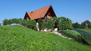 Wineyard Berus